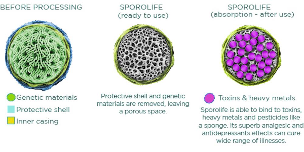 sporolife detox ingredient to remove toxins